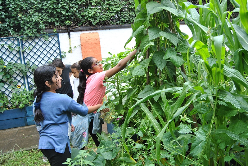 Picking-beans-27th-July-2019