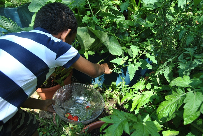 Picking-strawberries-20th-July-2019